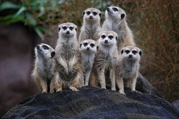 Das soziale Miteinander und Gegeneinander der Tiere