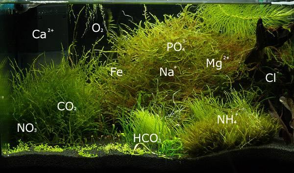 Das perfekte Aquariumwasser – ein Leitfaden zum Wasserpanschen