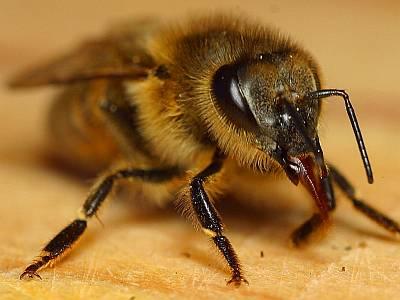 Wenn Bienen pessimistisch werden